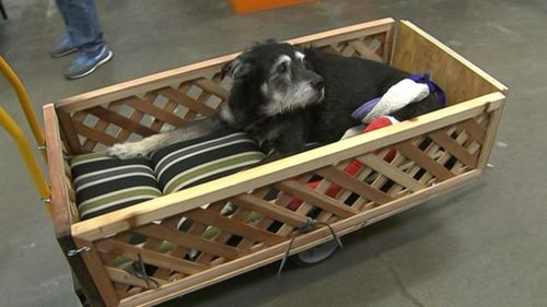 Ike in his new wagon (photo courtesy of ABC News)