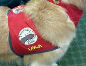 Lola's official therapy dog badge