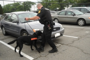 An explosive detection dog in action. Photo courtesy of the Department of Homeland Security
