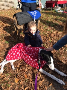 My dog Izzy meets a little boy at a promotion for Greyhounds as Pets