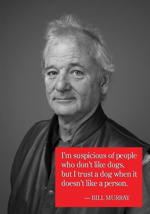 Bill Murray quotation
