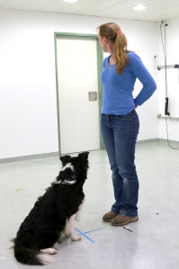 The dog follows Wallis' gaze to the door. (Photo: Clever Dog Lab / Vetmeduni Vienna)