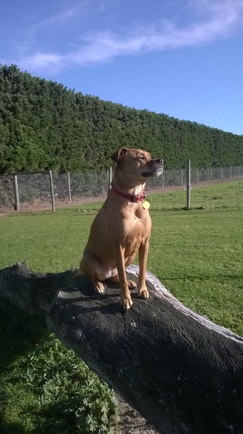 Kess looking free and regal, clearly enjoying her off-lead time