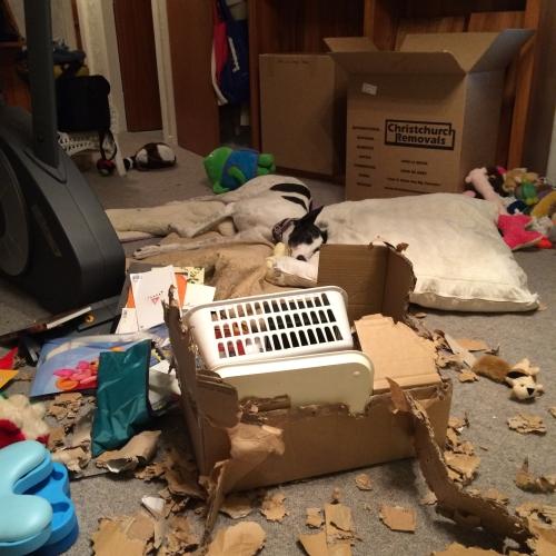 Izzy's unpacking job 29 June 2015
