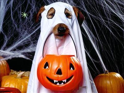 halloween+dog
