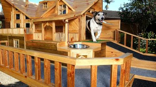 Dog Assa shows off the house (photo by Gold Coast Bulletin)
