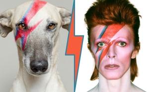 Aladdin Sane Bowie tribute