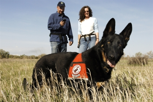 Detection dog for bears