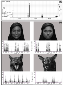 Dogs and emotions study