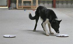 Dog intelligence test