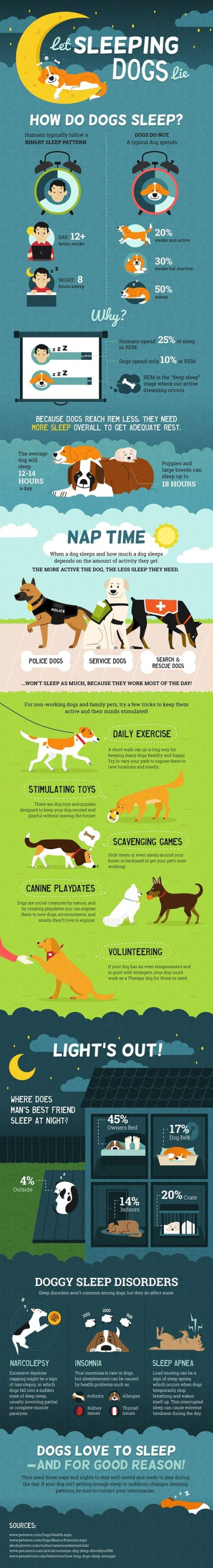Let Sleeping Dogs Lie Infographic