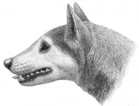 Fossil dog