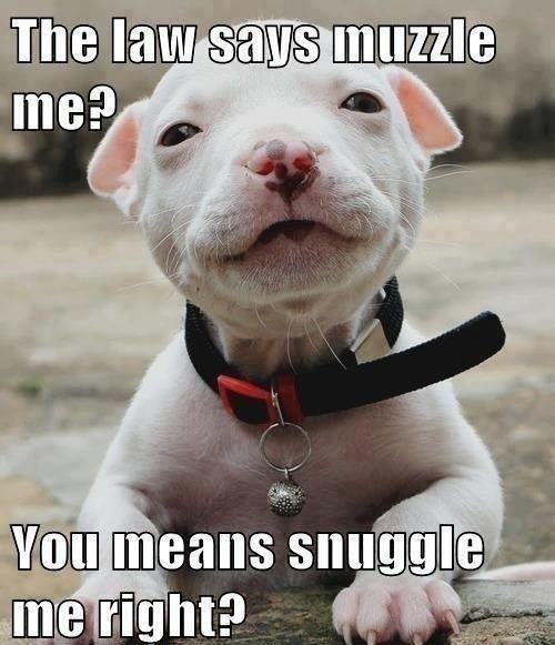 Muzzle vs Snuggle