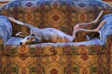 Sid on sofa