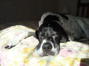 Daisy in sunshine 2014
