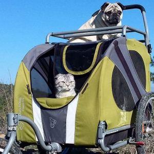 Bandito and Luigi in stroller