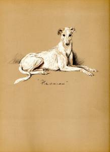 Flaxman the Greyhound