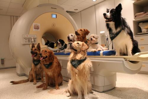 Dogs in MRI machine