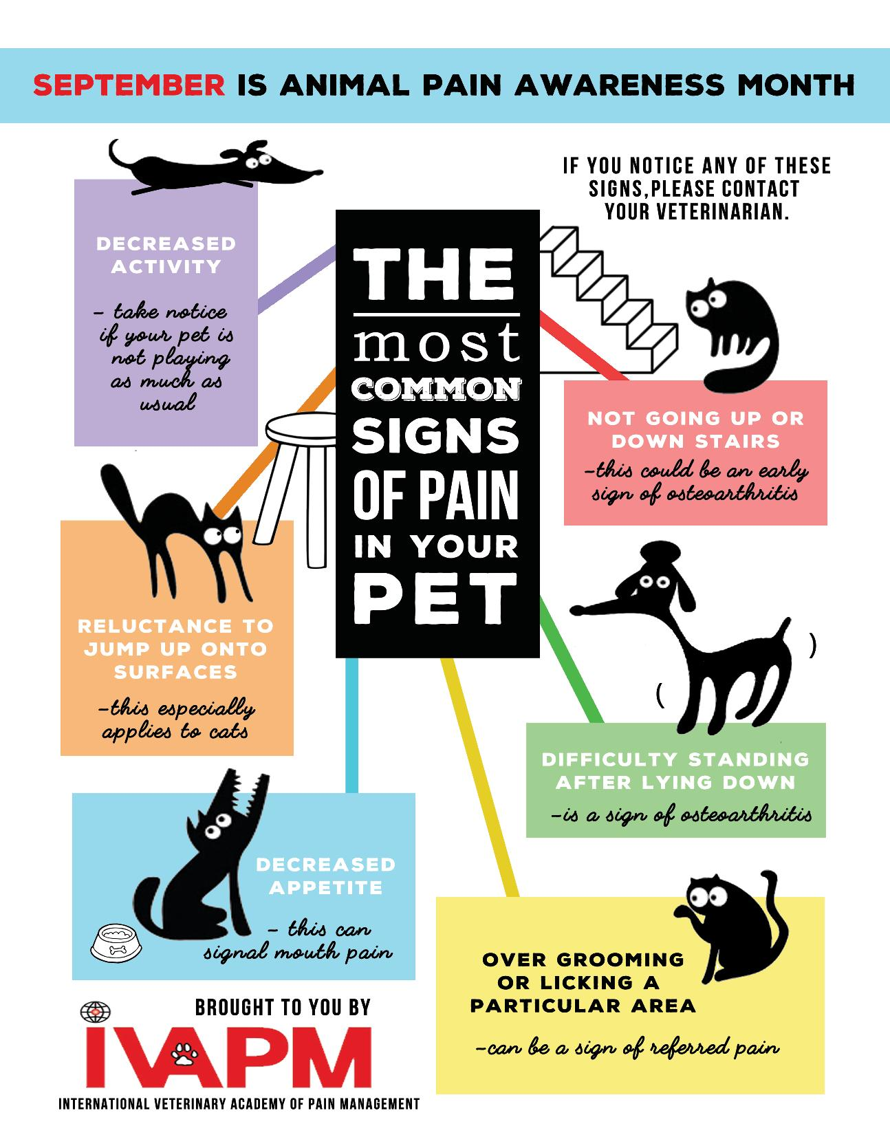 IVAPM-Pet-Pain-Awareness-Month-Poster-2016