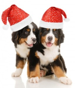 christmas_dog_highdefinition_picture_168935