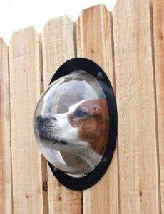 pet-peek-window-2