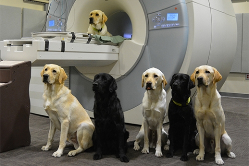 Dogs with MRI machine