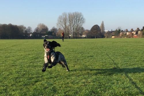 off-lead-dog-walking