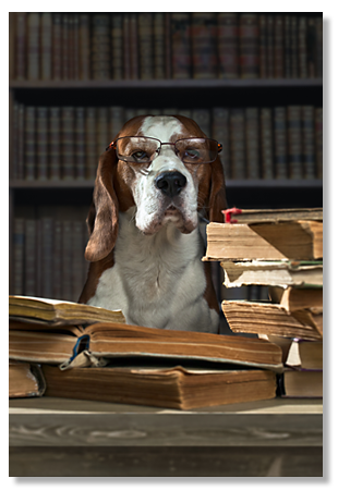 Boston Dog Lawyers picture
