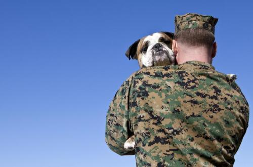 veteran with dog