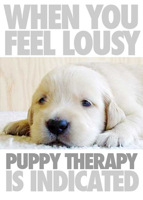 Puppy therapy