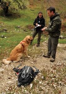 Conservation dog