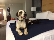 Big smile from Willa to be in a real bed