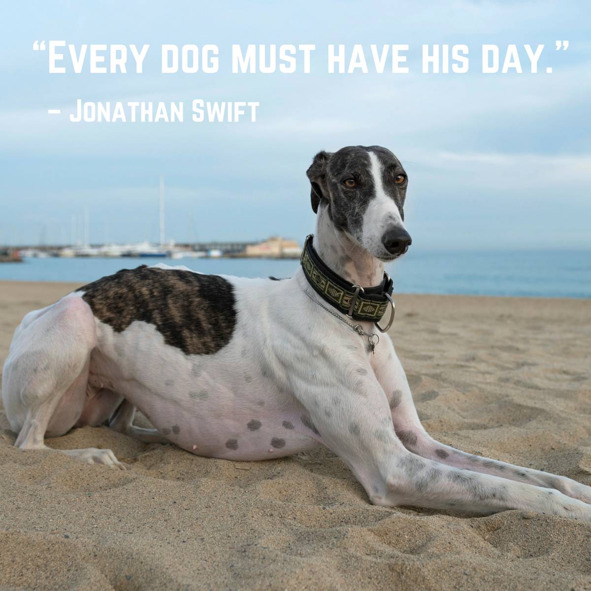 Every dog must have his day