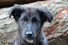 KAMINSKI-dog-eyes
