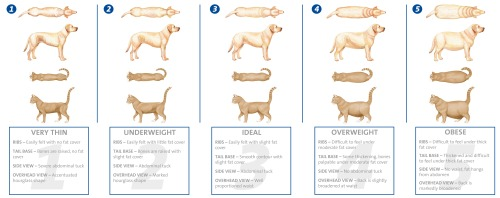 obesity | DoggyMom.com