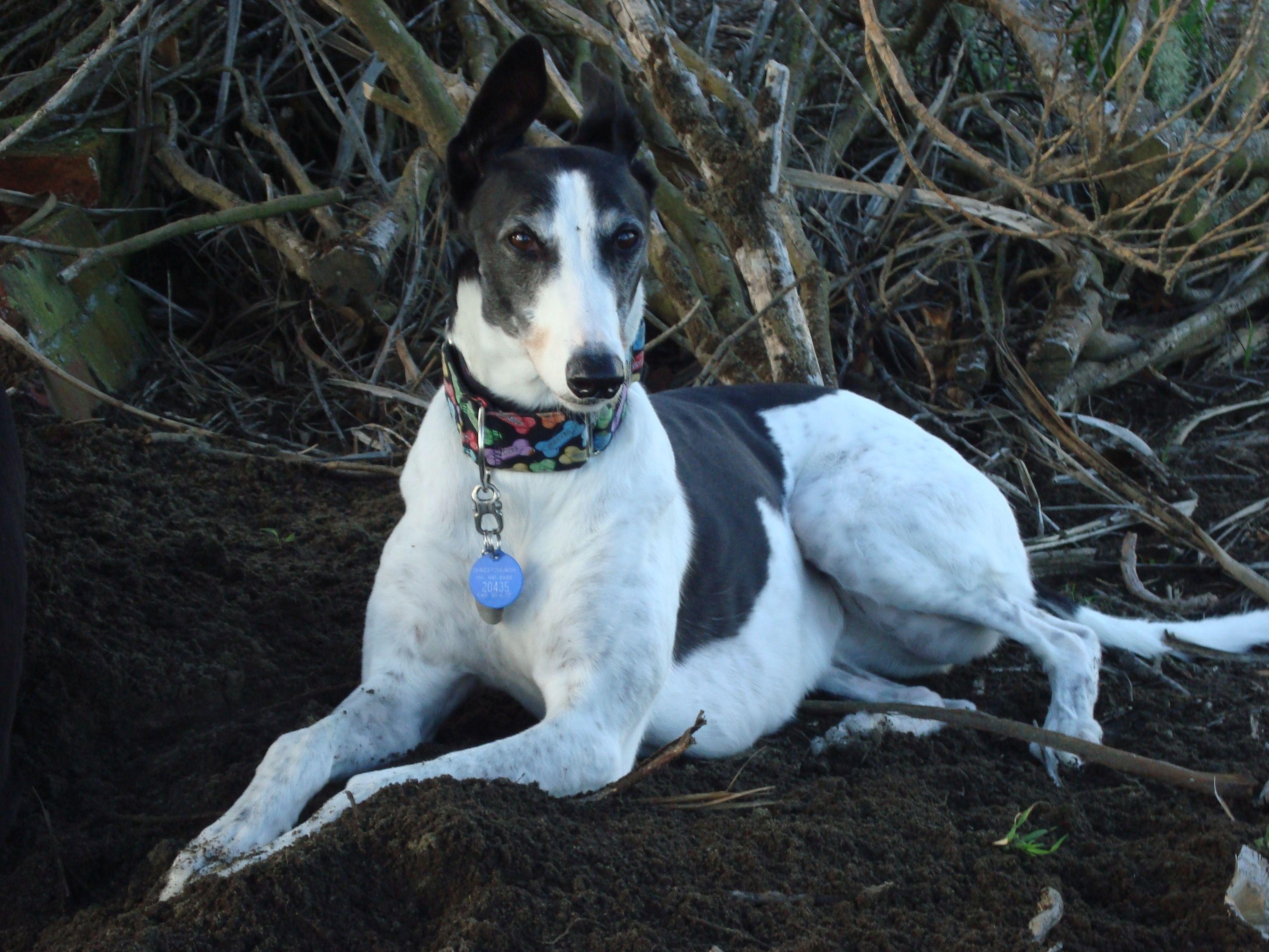 Izzy of The Balanced Dog