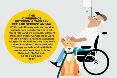 Therapy vs Service Dog