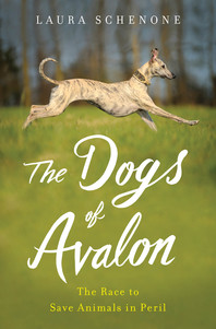The dogs of avalon