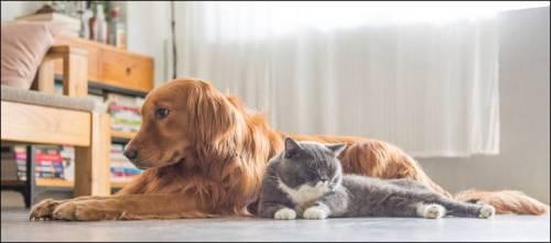 dog_and_cat_D558CAE2202DD