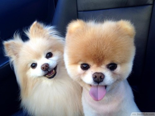 Cute dog buddies