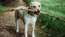 Dog intelligence photo