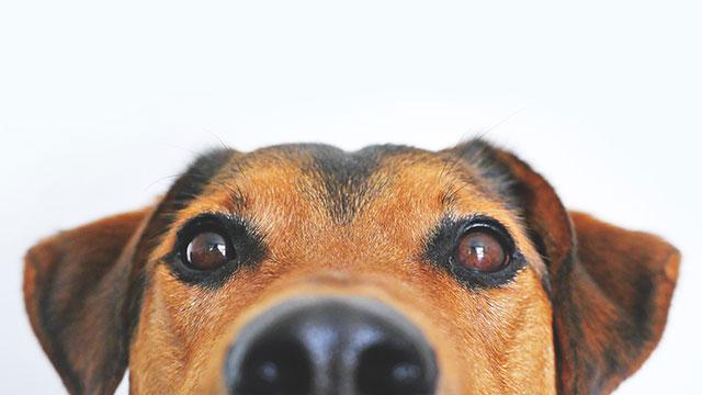 time dog
