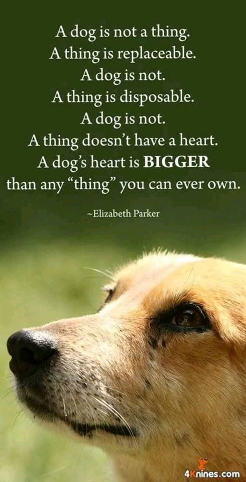Elizabeth Parker quotation dogs are not a thing