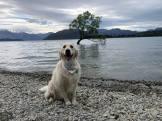 Neisha at Lake Hawea