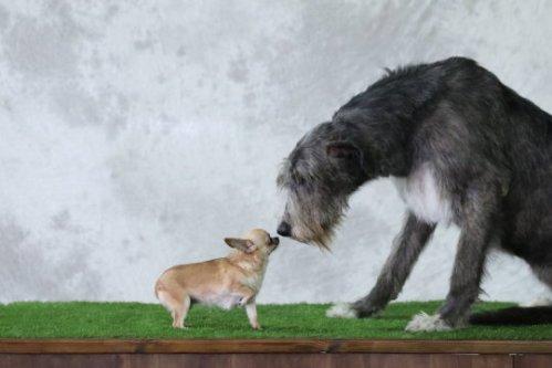 bigger vs smaller