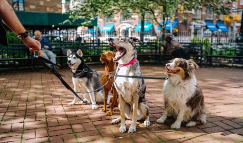 MSU dogs in park