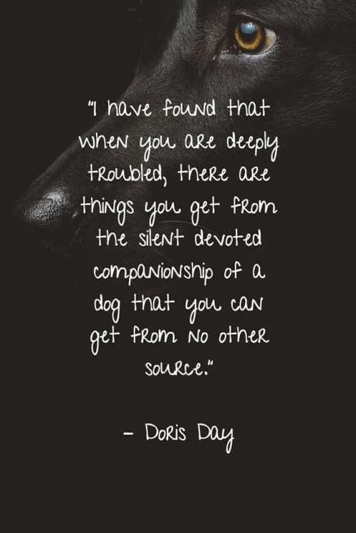 Doris Day quotation