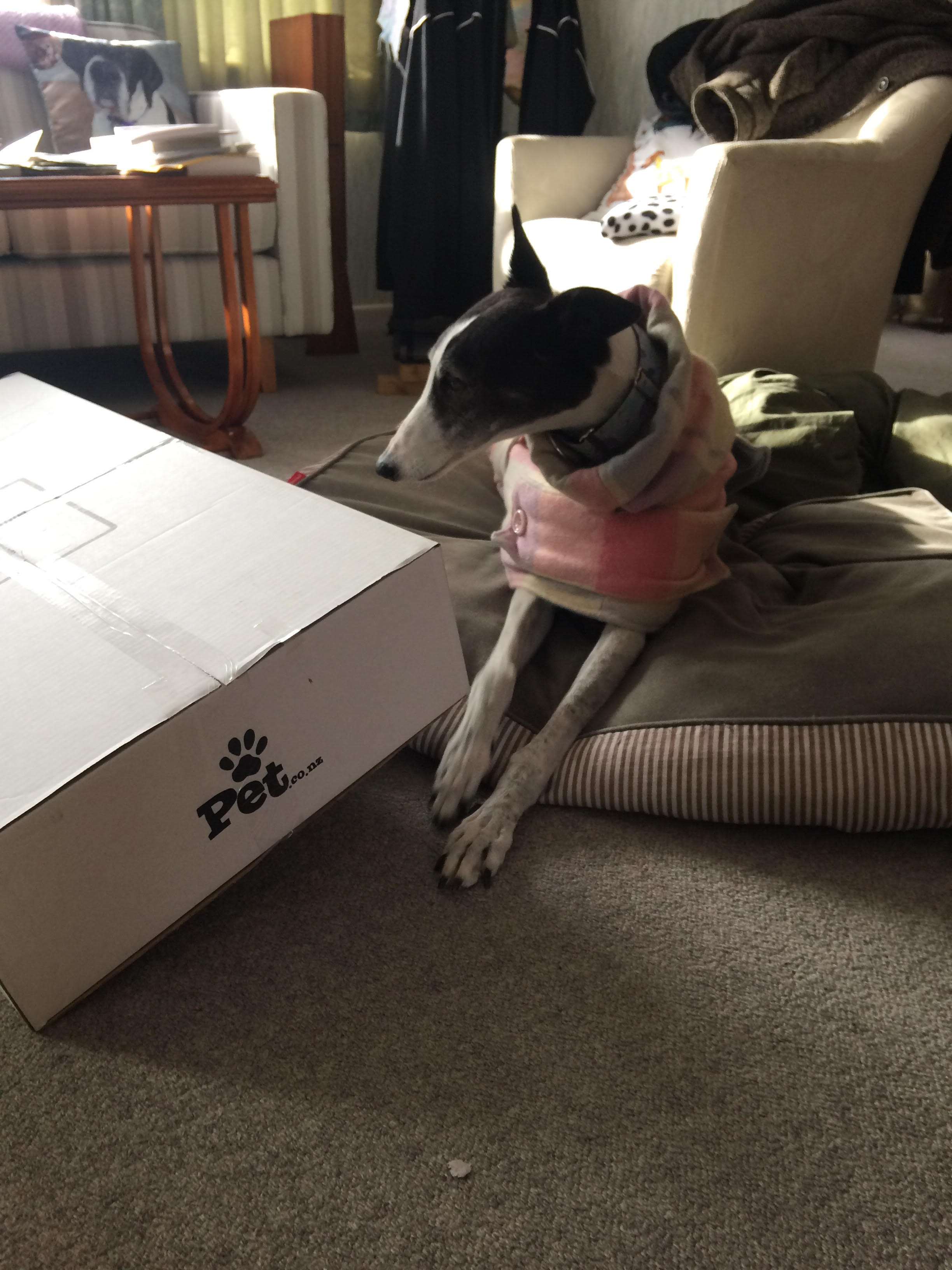 Izzy with pet food box