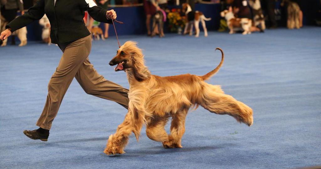 national-dog-show-2015