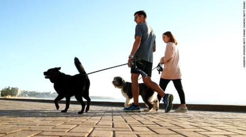 Dog owners walk their pets